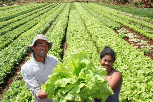 Deputados aprovam aluguel social e bolsa agricultor no Paraná