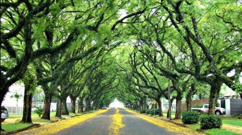 Rua Pedro Basso em Foz do Iguaçu, na lista das ruas mais bonitas do Brasil