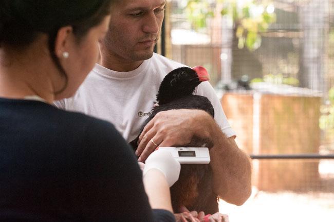 Parque recebe aves para programa de reprodução