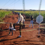 Plantação de Girassóis é interditada por causa de danos e, ainda assim, muita gente visita o local